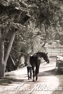 Strolling back to the barn