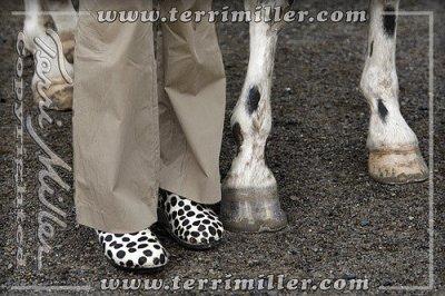 Spots everywhere!