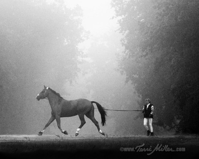 Lunging in the fog at Saumur