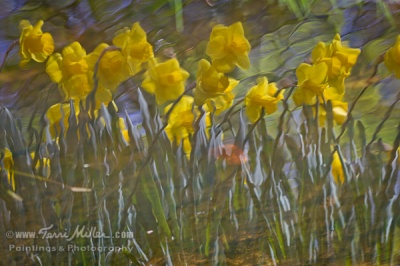 Van Gogh daffodil reflection