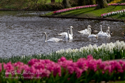 The lake at Keukenhof