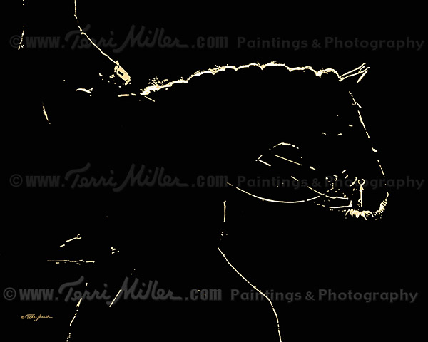 Rim Light: Loose Rein (one of a series of Rim Light images)