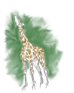 Reaching Giraffe