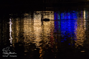 LSM_Swan Gold_14PM8011_TerriMiller