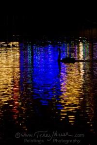 Swan Blue_14PM8009_TerriMiller