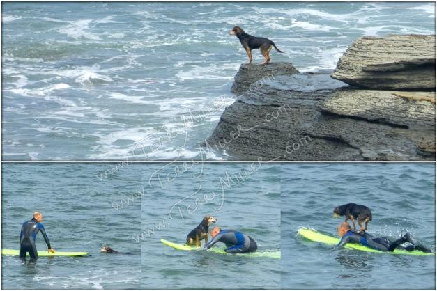 Surf Dog and his Human